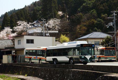 全但バス新旧塗装と桜.jpg